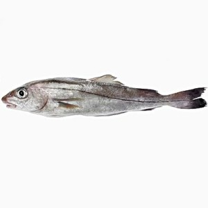 haddock hong kong