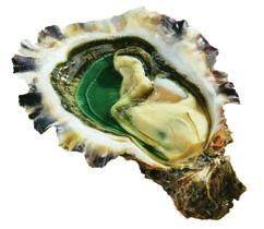 pousse en claire oysters hong kong