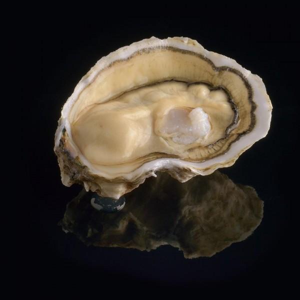 LA ROYALE oyster by DAVID HERVE HONG KONG M&C ASIA